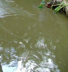 green water algae (2)