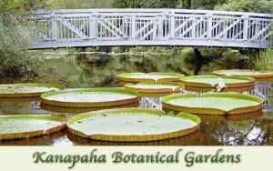 kanapaha gardens