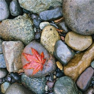 leaves on pebbles