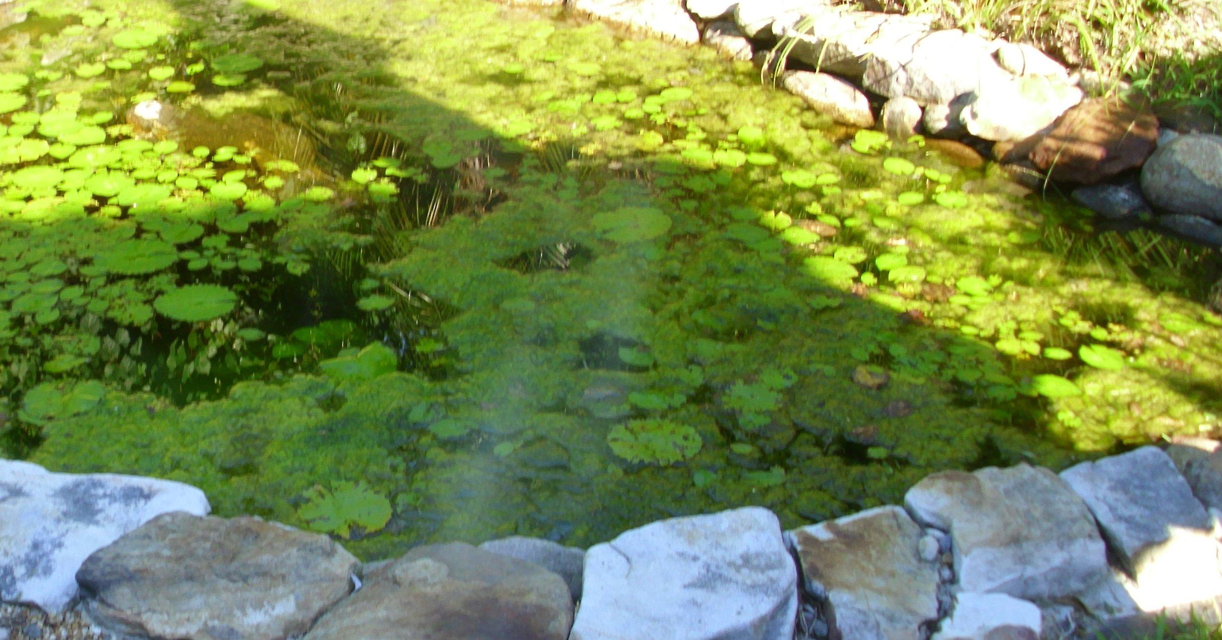 Natural Algae Control Backyard Getaway
